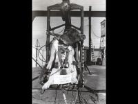 Na počátku byla Lajka aneb kosmonauti s čenichem, krunýřem, ocasem, křídly, osmi nohama...